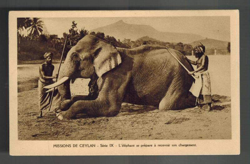 Mint Ceylon RPPC Real Picture Postcard Elephant being Washed Missionary