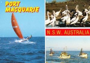 Port Macquarie New South Wales Boat Ship Wildlife Birds Photo Australia Postcard