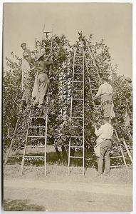 Crescent City FL Black Negro Orange Grove Pickers RPPC Real Photo Postcard