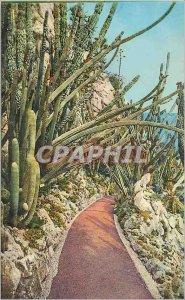 Old Postcard Jardin Exotique de Monaco Pilocerous Lanatus and Comets Cereus P...