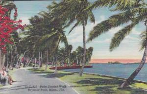 Florida Miami Palm Shaded Walk In Bayfront Park Curteich
