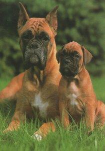 German Grumpy Mum & Child Dog 1980s Postcard