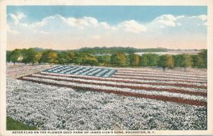 Aster Flag at James Vick Flower Seed Farm - Rochester, New York - WB