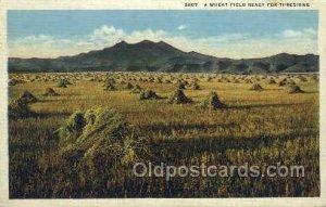 Wheat Field Farming Unused