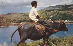 Guam, 40-60s : Native Carabao