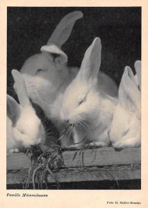 Rabbit Family Familie Mummelmann Foto H. Muller Brunke