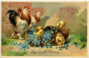 Greeting - Easter. Chick(s) and Rooster and Hen