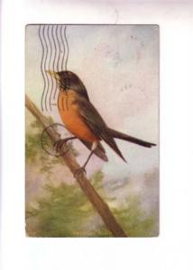 Painting Series 5348, American Robin, Indian Harbour Nova Scotia Split Ring C...