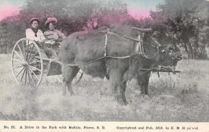 Pierre South Dakota Buffalo Cart Vintage Postcard JD933876