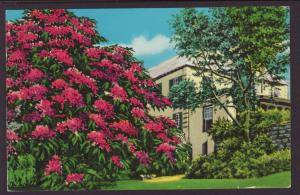 Royal Poinciana Tree,Bermuda Postcard BIN
