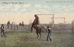 Cowboy With Horse Saddling An Outlaw Bronco