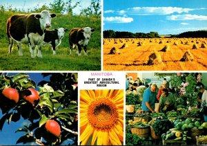 Canada Manitoba MacGregor Agricultural Scenes