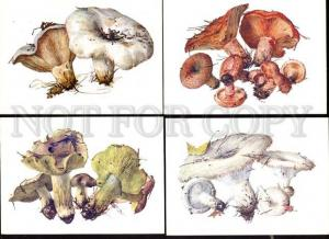 033904 MUSHROOMS Collection of 16 russian colorful cards #3
