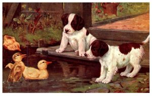 Dog   Spaniels  puppies and ducklings