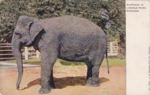 Elephant In Lincoln Park Chicago Illinois 1909