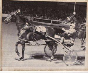 ROOSEVELT RACEWAY, Harness Horse Race , MALICE (7) winner, 1981