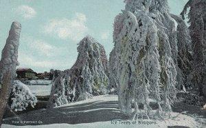 NIAGARA FALLS, Ontario, Canada, 1900-1910s; Ice Trees At Niagara
