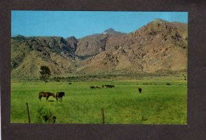CA Warner Mountains From Surprise Valley California Postcard Horses