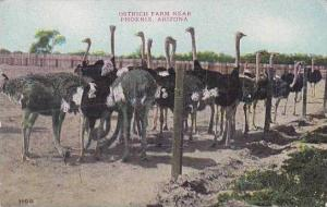 Arizona Phoenix Ostrich Farm