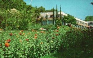 Vintage Postcard Garden Flowers Hotel Casino De La Selva Cuernavaca Morelos MX