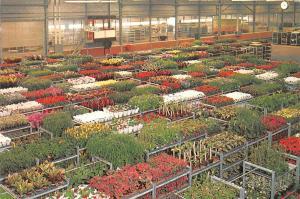 Netherlands Holland Aalsmeer, Potted plants section, United Flower Markets