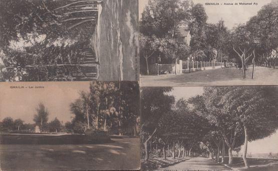 Ismailia Jardins Gardens Avenue De Mohamed Aly 4x Antique Postcard s