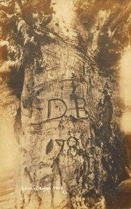 Beech Tree Where Daniel Boone Killed a Bear in Kentucky Real Photo Postcard.