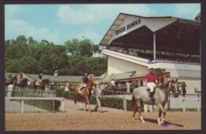 Horses,River Downs,Cincinnati,OH Postcard