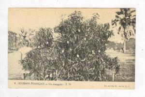 Soudan Francais - Un manguier, 00-10s