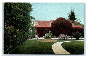 Postcard A Bouganvillea Vine in California CA MA18