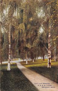 Petoskey Michigan~G R & I Park Scene~Cut Leaf Birches Along Path~c1910 Postcard