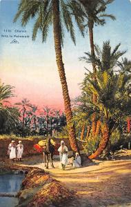 Tunisia? African Native People, Camel, Palm Trees, Chemin dans la palmeraie