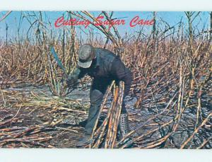 Pre-1980 CUTTING SUGARCANE STALK South Bay & Clewiston & Moorehaven FL hn3245-12