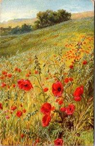HILLS WILD FLOWERS - Art Vintage postcard - 1909 - Posted
