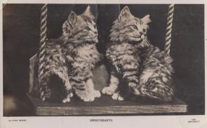 Sweethearts Cat On A Swing Lovers Real Photo Cats Swinging Postcard