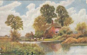 RINGWOOD, Hampshire, England, 1900-10s; The River Farm, TUCK #7114