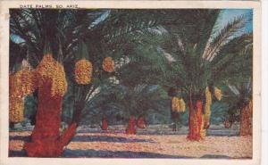 Arizona Phoenix Date Palms South 1940