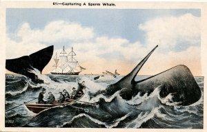 Capturing a Sperm Whale
