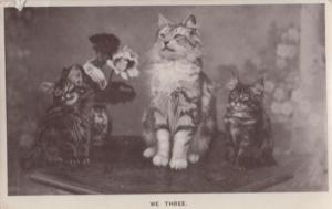 We Three Proud Group of Cats Old Real Photo Postcard