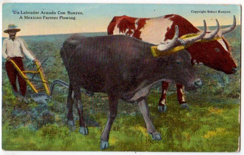 Mexican Farmer Plowing - Oxen