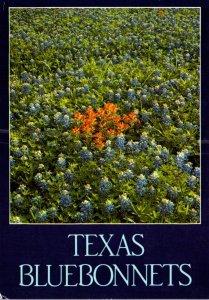 Texas State Flower Bluebonnets