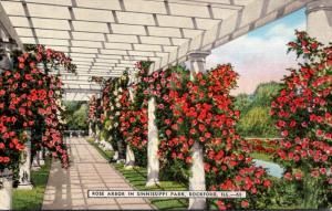 Illinois Rockford Rose Arbor In Sinnissippi Park