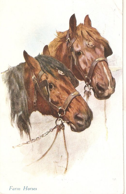 fARM hORSES nICE OLD VOINTAGE eNGLISH POSTCARD