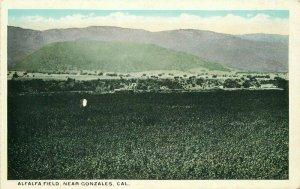 Alfalfa Field Gonzales California Farm Agriculture Monterey 1920s Postcard 8332