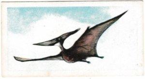 Trade Cards Brooke Bond Tea Prehistoric Animals No. 28 Pteranodon