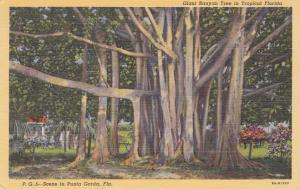 Giant Banyan Tree - Punta Gorda FL, Florida - Linen