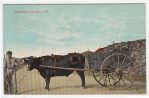 Ox Wagon in Harness Yarmouth Nova Scotia 1920 postcard