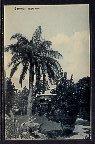Grugru Palm,Bermuda