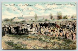 Yakima Valley Washington~Workers in Mr Gano's Potato Field~Hill Weighed 130~1910