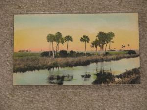 Florida Everglades-Hand Colored, Unused